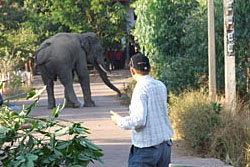 ระทึก! ช้างตกมันวิ่งทำลายทรัพย์สินชาวบ้าน