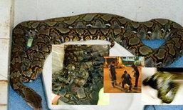 ช็อก! งูเหลือมยักษ์บุกร้านชุดวิวาห์กลางดึก