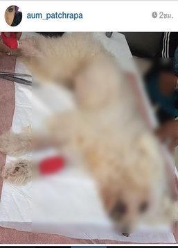 เศร้า!อั้มพัชราภาร่ำไห้ไอติมหมาตัวโปรดตาย