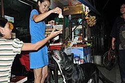 เจ้าแม็ค หมาแสนรู้ คาบเก้าอี้แลกของกิน