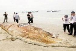 พบซากสัตว์ประหลา่ดยักษ์ เกยตื้นชายหาดจีน