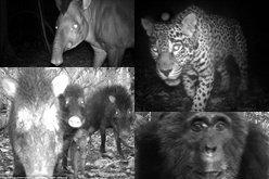 หาดูยาก! ภาพแอบถ่ายสัตว์ป่าลึกทั่วโลก
