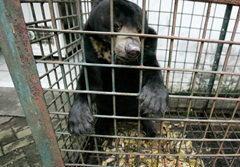สื่อนอกแฉ! ภาพหดหู่ที่สวนสัตว์อินโดนีเซีย