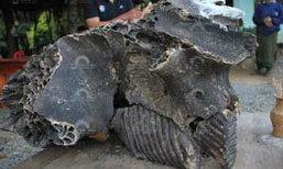 ชาวบ้านตะลึง พบหัวช้างกลายเป็นหิน กลางลำห้วย