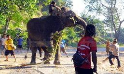 ช้างหัวหินคลั่ง! กระทืบควาญเละ อาละวาด 6 ชม.