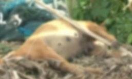 หมา 3 ตัว ช่วยเจ้าของถูกไฟช็อต สุดท้ายตายหมู่