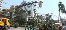 พัทยาลมพัดกระโชกแรงต้นไม้หักโค่นหลายจุด