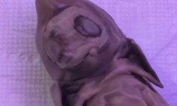 'เอเลี่ยน-สัตว์กลายพันธุ์'? พบซากสิ่งมีชีวิตแปลกประหลาดในสหรัฐฯ