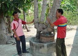 อุทัยฯชาวบ้านแห่ขอเลขต้นมะพร้าวประหลาด