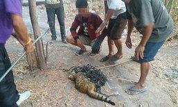ดราม่า! เทศบาลฯแจงรู้เท่าไม่ถึงการณ์ ทำแมวเบงกอลตาย