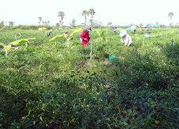 ภัยแล้งราคาพืชผักสงขลาพุ่งผักชีพุ่งกก.ละ200บ.