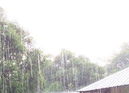 ฝนช่วยเติมน้ำบึงบัวอุทยานฯเขาสามร้อยยอด