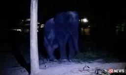 ช้างคลั่งโหดกระทืบควาญตาย ต่อหน้าต่อตานักท่องเที่ยวจีน