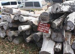 ป่าไม้เขมราฐรวบ2ผู้ต้องหาขนไม้พะยูงค่า3ล.