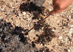 คราบน้ำมันลอยเกยทั่วหาดสัตหีบเริ่มเบาบาง