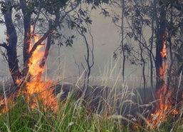 ไฟไหม้ป่าเสม็ดในพื้นที่กลางเมืองสงขลา