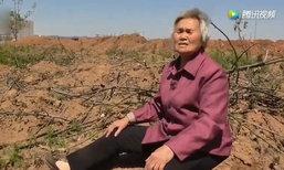 คุณยายจีนช้ำ! ปลูกต้นวอลนัทไว้เลี้ยงชีพ แต่กลับถูกคนแอบขุดไปกว่า 300 ต้น