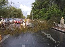 ต้นไม้เกี่ยวเสาไฟฟ้าล้มถนนศรีอยุธยาขวาง1เลน
