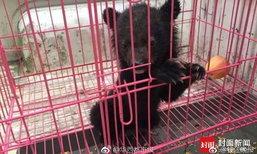ช่วยด้วย! หมีดำน้อยในจีนหลงทาง ขอความช่วยเหลือที่สถานีตำรวจ