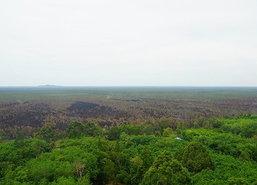 จนท.เร่งสำรวจความเสียหายป่าพรุโต๊ะแดง