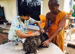 พบสัตวแพทย์สตูลใจบุญรักษาหมา-แมวจรฟรี