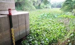 พบผักตบชวาแม่น้ำปราณบุรี ชาวบ้านวอนหน่วยงานที่เกี่ยวข้องเร่งแก้ไขปัญหาด่วน