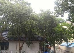 ภาคเหนือและอีสานมีฝนเพิ่มขึ้นตกหนักบางแห่ง-กทม40%