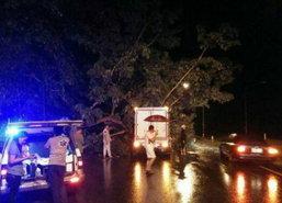 ฝนตกหนักต้นจามจุรีล้มทับรถปิคอัพถ.ชัยภูมิ-ขอนแก่น