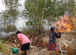 ไฟไหม้ป่าพรุควนเคร็งเมืองคอนวิกฤติอีกระลอก
