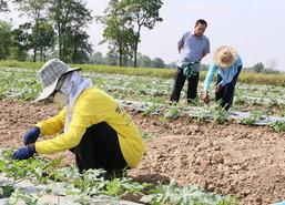 สภาเกษตรกรพิจิตรส่งเสริมลดพื้นที่การทำนาปรัง