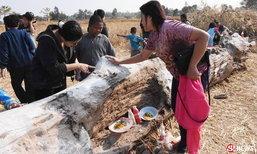 พบต้นตะเคียนยักษ์อายุกว่า 200 ปี ชาวบ้านแห่ขอโชค