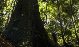 เทรนด์ปลีกวิเวก หนีเข้าป่าของชาวญี่ปุ่นกำลังได้รับความนิยม  เพราะเบื่อสังคมวุ่นวาย