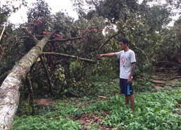 พายุฤดูร้อนถล่มสวนทุเรียนจันทบุรีเสียหาย13ลบ.