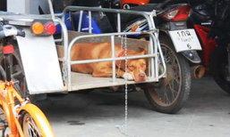เเจ้งข้อหาเจ้าของสุนัข ปล่อยกัดยายวัย 82 เสียชีวิต