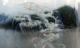 ชาวบ้านพบแมงกะพรุนน้ำจืดหายาก เก่าแก่กว่าไดโนเสาร์