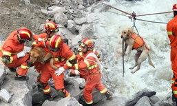 เจ้าตูบกู้ภัยเหนื่อยจนทรุด หลังช่วยหาผู้รอดชีวิตเหตุดินถล่มหมู่บ้านจีน