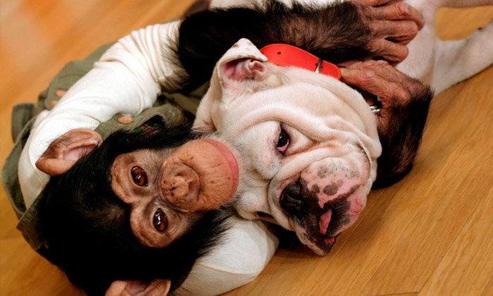 """เจมส์ คู่หูปังคุงจาก """"ขำกลิ้งลิงกับหมา"""" ตายแล้ว"""