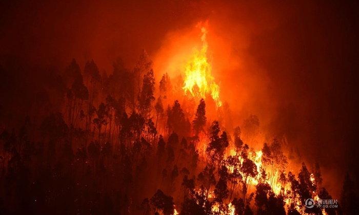 ไฟป่าในโปรตุเกส ยอดผู้เสียชีวิตพุ่ง 62 ราย