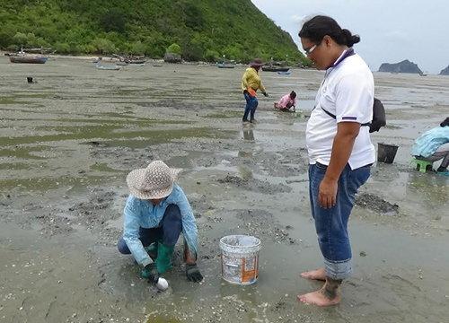 น้ำทะเลประจวบฯลดชาวบ้านแห่ขุดหาหอย
