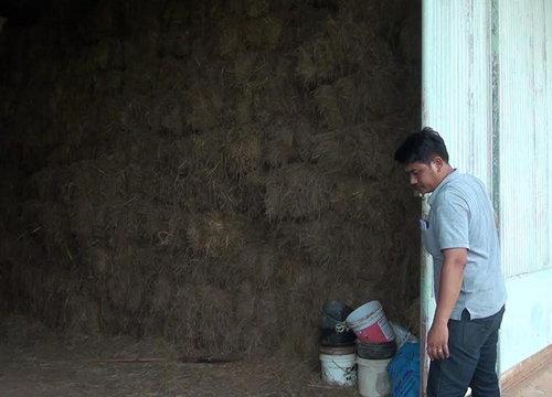 สกลนครสำรองเสบียงปศุสัตว์ช่วยเกษตรกรน้ำท่วม