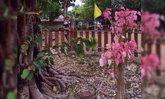 อ.เจษฏา แจงใบโพธิ์สีชมพู เป็นเรื่องธรรมชาติ