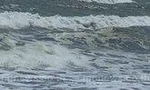 นราฯเร่งช่วยชาวบ้านประสบภัยน้ำทะเลหนุน