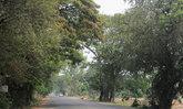 ส.ต้านโลกร้อนชี้สัญญาณดีหลังรัฐสั่งล้มตัดอุโมงค์ต้นไม้
