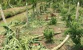 พายุถล่มกำแพงเพชรสวนมะละกอกล้วยไข่เสียหาย