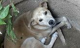 กู้ภัยช่วยสุนัขตกบ่อในจ.สุโขทัยนาน2วัน