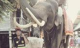 อุทาหรณ์ ช้างพลายขบวนแห่นาคตกใจ เอางาแทงวัยรุ่นดับ