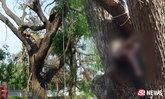 อาถรรพ์ต้นก้ามปูยักษ์ ลุงรับงานตัดกิ่งไม้ โดนทับตายคาวัด
