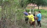 ชาวชัยภูมิแห่จับดักแด้ป่าขายสร้างรายได้เสริม