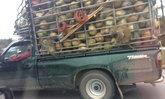 ดราม่า! ผูกคอลิงกับรถขนมะพร้าว แถมให้ตากฝน