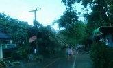 พายุฝนถล่มปายต้นไม้หักโค่นทับเสาไฟบ้านพัง